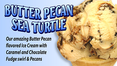 Butter Pecan Sea Turtle